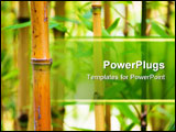PowerPoint Template - Bamboo canes growing in their natural habitat.