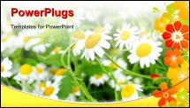 PowerPoint Template - Close up of chamomile flower in a field leaning towards the sun rays