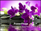 PowerPoint Template - Close up of beautiful purple orchids on massage stones