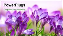 PowerPoint Template - Beautiful Spring Flowers