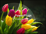 PowerPoint Template - tulips