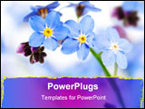 PowerPoint Template - Forget-me-not flower close-up on the white background