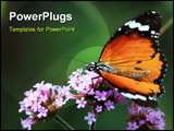 PowerPoint Template - butterfly macro insect and wildlife nature plant