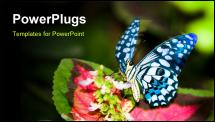 PowerPoint Template - a butterfly glittering wings on a leaf