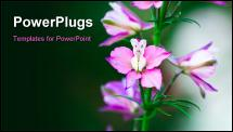 PowerPoint Template - pink flowers on green field