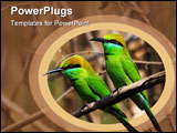 PowerPoint Template - Green Beeeaters Merops orientalis at Fort Bandhavgarh Madya Pradesh India.WILD.
