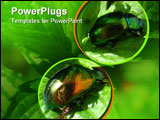 PowerPoint Template - Two shiny beetles shelter from the midday sun on a mint plant