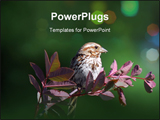PowerPoint Template - Picture of a Chipping Sparrow on a branch with a green background