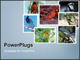 PowerPoint Template - Collage of different songbirds consisting of seven images on cloud blue background