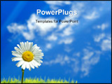 PowerPoint Template - single white flower against cloudy blue sky