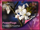 PowerPoint Template - Apple blossom flower (useful background). Soft focus