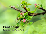 PowerPoint Template - Closeup of blossom bud on early spring day