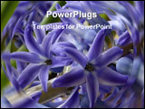 PowerPoint Template - picture of bluebells.close macro type shot. good floral colour.