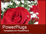 PowerPoint Template - A Perfect Rose