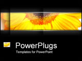 PowerPoint Template - Close-up of sunflower.