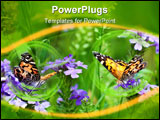 PowerPoint Template - Two Painted Lady butterflies in a field of wild verbena