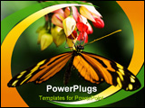PowerPoint Template - Tropical butterfly Tiger heliconian on red flowers