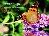 PowerPoint Template - Butterfly on purple flower reflection in water