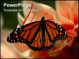 PowerPoint Template - A beautiful monarch butterfly caught on a sunny afternoon by a peach flower