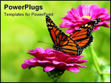 PowerPoint Template - beautiful close up of a butterfly on a pink flower