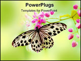 PowerPoint Template - Macro Rice Paper Butterfly on pink flower