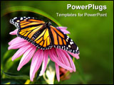 PowerPoint Template - monarch butterfly resting on a conflower with wings spread open