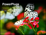 PowerPoint Template - butterfly
