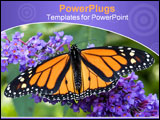PowerPoint Template - close-up photo of a monarch butterfly on a purple-blue butterfly bush.