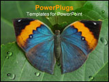 PowerPoint Template - A tricolor Butterfly posing on green leaves