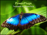 PowerPoint Template - blue morpho butterfly (lat. morpho peleides) with open wings on a leaf