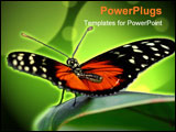 PowerPoint Template - a tropical butterfly is ready for take-off in a garden
