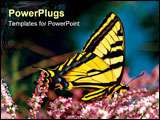 PowerPoint Template - Macro profile of a Swallowtail Butterfly feeding on spring blossoms