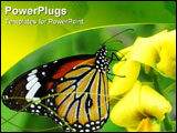 PowerPoint Template - isolated shot of orange tiger Butterfly insect on flower