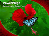 PowerPoint Template - butterfly on hibiscus