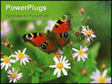 PowerPoint Template - butterfly with flowers