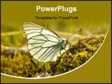 PowerPoint Template - The butterfly drinks water from a moss