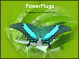 PowerPoint Template - a beautiful butterfly