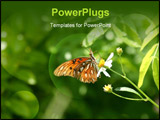 PowerPoint Template - A close-up of a butterfly.