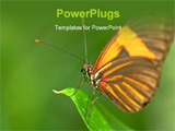 PowerPoint Template - a brown orange butterfly on a leaf.
