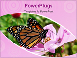 PowerPoint Template - monarch butterfly in blooming garden
