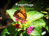 PowerPoint Template - Amazing garden delights of beauty, color and nature