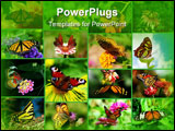 PowerPoint Template - a pretty butterfly with wings spread on a yellow flower