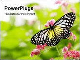 Butterfly Feeding On A Flower. Floral background