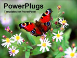PowerPoint Template - butterfly on flower