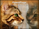 PowerPoint Template - the face of a bengali kitten staring at her own reflection in a window.