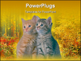 PowerPoint Template - Some kittens for a photo shoot