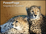 PowerPoint Template - Two cheetah wild cats resting on the African grass