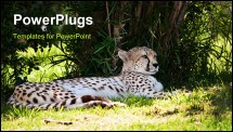 PowerPoint Template - Cheetah laying down in the shade at a zoo