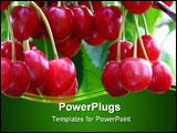 PowerPoint Template - sweet red ripe cherries on a tree