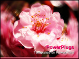 PowerPoint Template - Glorious bright pink cherry blossoms for spring.